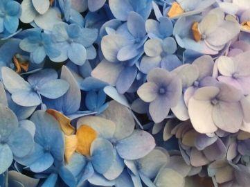 Last Flowers 11.17.2016