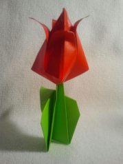 Origami Tulip 5.8.2017.