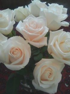 White Roses 6.4.2017