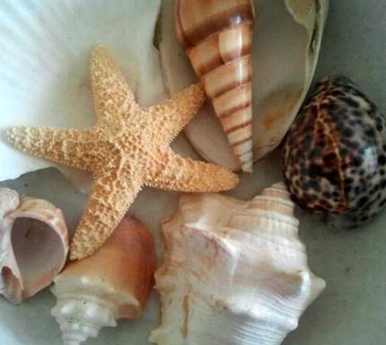 Seashells 6.14.2017