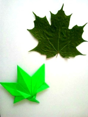 Sugar Maple Leaf and Origami Maple Leaf 7.2.2017