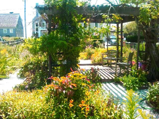 Suzanne's Garden 9.1.2017