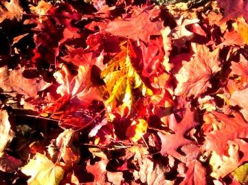 Fallen Leaves 11.19.2017
