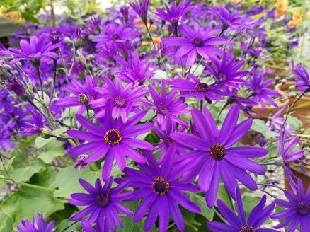 Purple Flowers 4.21.2019